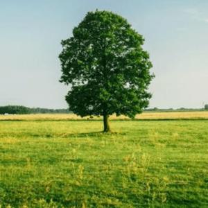 Bibit Pohon